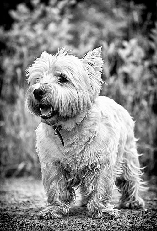 Фотография собаки в чёрно-белом
